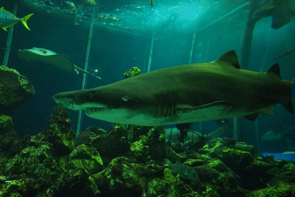 海洋科学博物館シロワニ